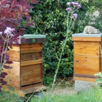 The Old Dairy Beehives